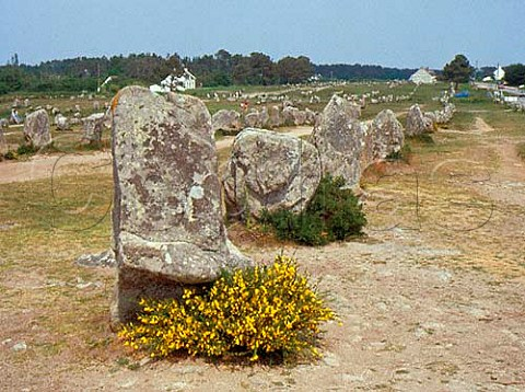Alignments de Menec at Carnac Brittany France
