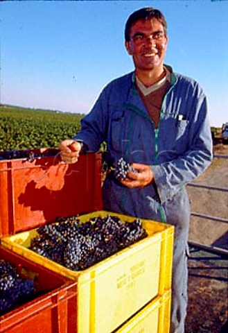 JeanLouis Raillard with crates of   harvested Pinot Noir grapes in   Les Malconsorts vineyard which he farms    for Moillard   VosneRomane   Cte dOr France    Cte de Nuits