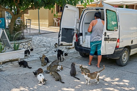 Morning fish delivery to restaurant in Assos with hopeful cats Cephalonia Ionian Islands Greece